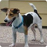 Adopt A Pet :: Jaxson in Houston - Houston, TX