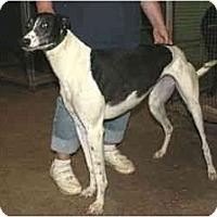 Adopt A Pet :: Macy (TNJ Macy) - Louisville, KY