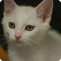 Adopt A Pet :: Adonis - Canoga Park, CA