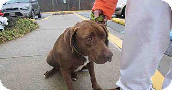 Labrador Retriever Mix Dog for adoption in Newnan City, Georgia - Mocha
