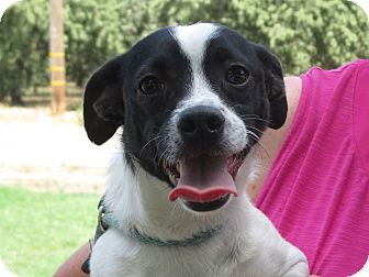 Terrier (Unknown Type, Small) Mix Dog for adoption in Turlock, California - Layla