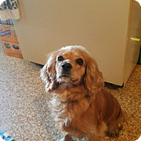 Adopt A Pet :: Nellie 2yr Adopted - Mentor, OH
