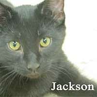 Adopt A Pet :: Jackson - Warren, PA