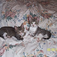 Adopt A Pet :: Heidi - Statesville, NC