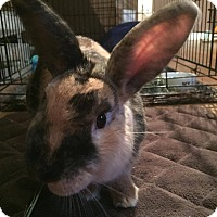 Adopt A Pet :: Toby - Loves Pats! - Huntsville, ON