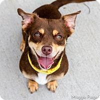 Adopt A Pet :: Cooper - Naperville, IL