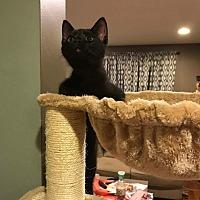 Adopt A Pet :: Jynx - Covington, KY