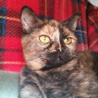Adopt A Pet :: Sara - Mountain Center, CA