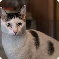 Adopt A Pet :: Gabriel - Staten Island, NY