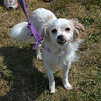 Adopt A Pet :: Frances - Akron, OH