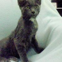 Adopt A Pet :: Jerry - Marshalltown, IA