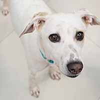 Adopt A Pet :: Mineko - Richmond, BC