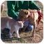 Photo 3 - Pit Bull Terrier Mix Dog for adoption in Marion, Arkansas - Daniel