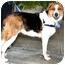 Photo 3 - Border Collie/Hound (Unknown Type) Mix Dog for adoption in Vista, California - Tucker