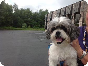 Shih Tzu Mix Dog for adoption in Long Beach, New York - Nunu