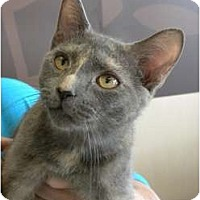 Adopt A Pet :: Beatrice - Frederick, MD