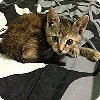 Adopt A Pet :: Malina - Acme, PA