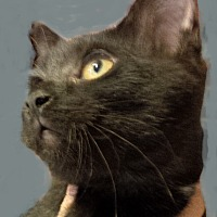 Adopt A Pet :: Chalette - Seneca, SC