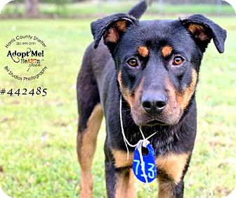 German Shepherd Dog Mix Dog for adoption in Portland, Oregon - Sammy
