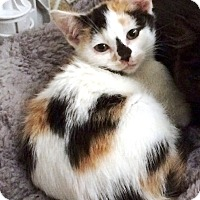 Adopt A Pet :: Autumn - Prospect, CT