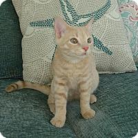 Adopt A Pet :: Keanu - Horsham, PA