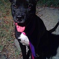 Adopt A Pet :: Libby - Tampa, FL