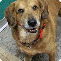 Adopt A Pet :: Rollie - Dunkirk, NY