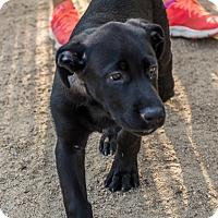 Adopt A Pet :: Jesse James - Phoenix, AZ
