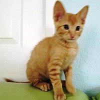 Adopt A Pet :: Pickles - Orange, CA