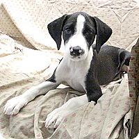 Adopt A Pet :: 17-d07-011 JoJo - Fayetteville, TN