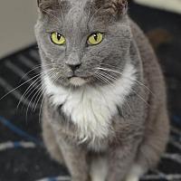 Adopt A Pet :: Agatha170666 - Atlanta, GA
