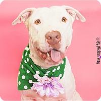 Adopt A Pet :: Beauty - Phoenix, AZ