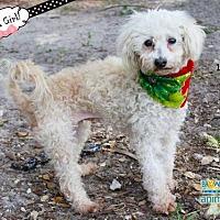 Adopt A Pet :: Bell/July - Ft. Lauderdale, FL