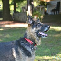 Adopt A Pet :: Alex - Clemmons, NC