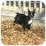 Photo 3 - Boston Terrier Dog for adoption in Muldrow, Oklahoma - Bruno