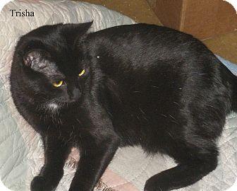 Bombay Cat for adoption in San Ramon, California - Tessa