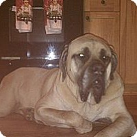 Adopt A Pet :: Rosco (AL) - Asheboro, NC