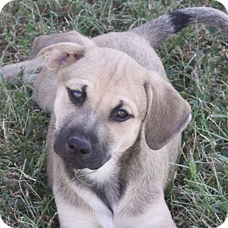 Terrier (Unknown Type, Medium) Mix Puppy for adoption in kennebunkport, Maine - Fallon - in Maine