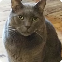 Adopt A Pet :: Dougal - Horsham, PA