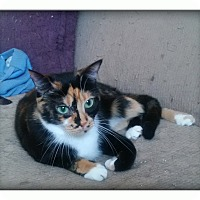 Adopt A Pet :: Mia - london, ON