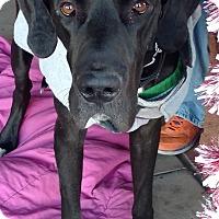 Adopt A Pet :: Onni - Mesa, AZ