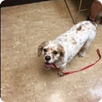 Adopt A Pet :: Gibbs - Brick, NJ