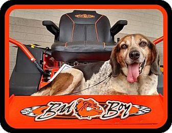 Beagle Mix Dog for adoption in Rustburg, Virginia - Bernie