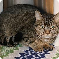 Adopt A Pet :: Stella - Council Bluffs, IA
