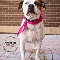 Adopt A Pet :: Mya (Bonded Pair) - Charlotte, NC
