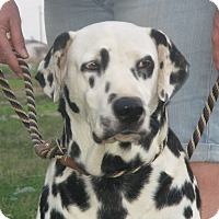 Adopt A Pet :: Manchitas - Turlock, CA