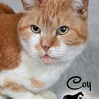 Adopt A Pet :: Coy - Broadway, NJ