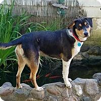 Adopt A Pet :: Buddy - Clarksville, MO