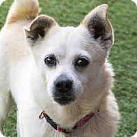 Adopt A Pet :: Deirdre - Agoura, CA