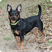Adopt A Pet :: Nico - Muskegon, MI